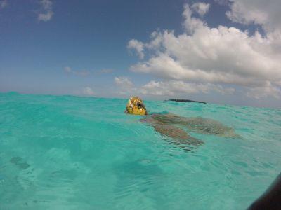 MANA NAUTIQUE -  Excursions - Île des Pins - Photo 3 - Nouvelle-Calédonie